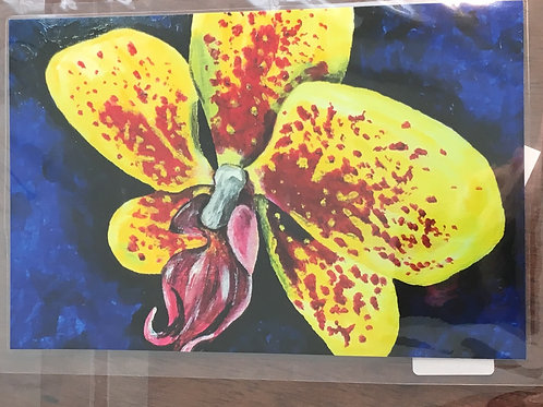 Yellow red moth orchid magnet