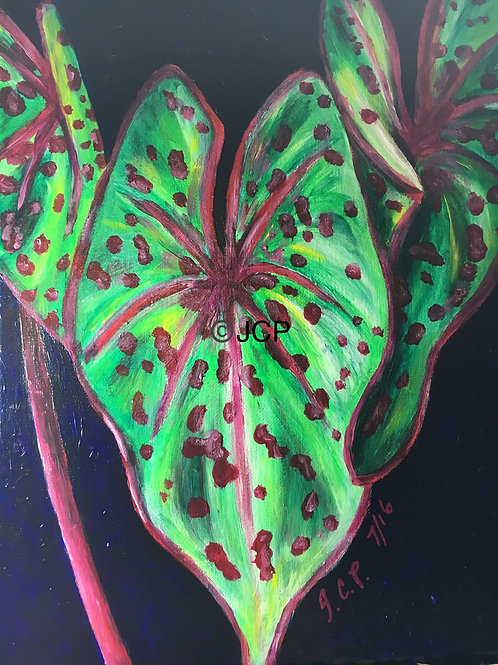 Red and Green Taro Leaf