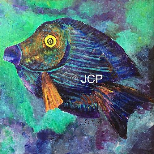 Hawaiian surgeonfish