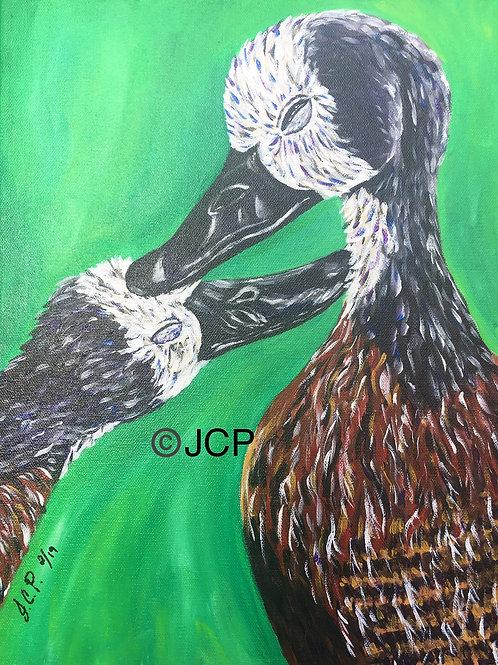 White Headed Duck Kisses her Gossling