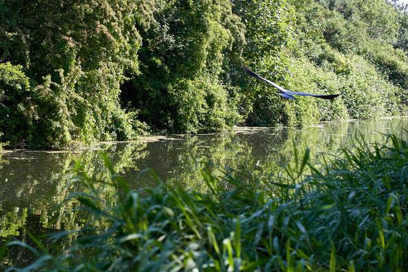 Sough Canal 15 May 20_2172.jpg