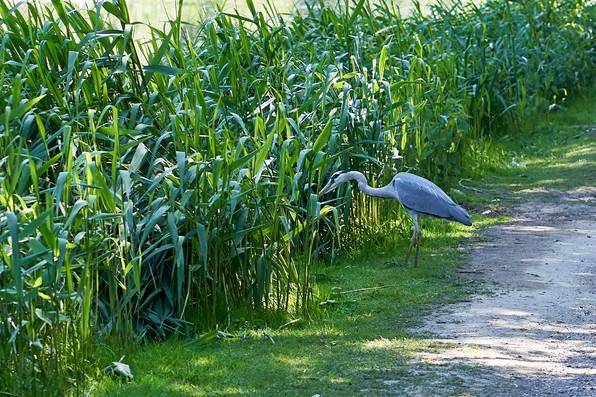 Sough Canal 15 May 20_2183.jpg