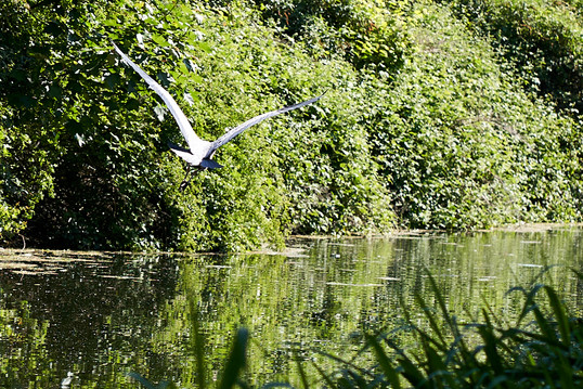 Sough Canal 15 May 20_2168.jpg