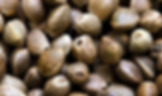 Seeds Close-up.PNG