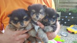 Bailey, Bella und Benji