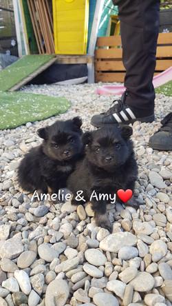 Amelie und Amy