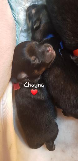 Chayna.jpg