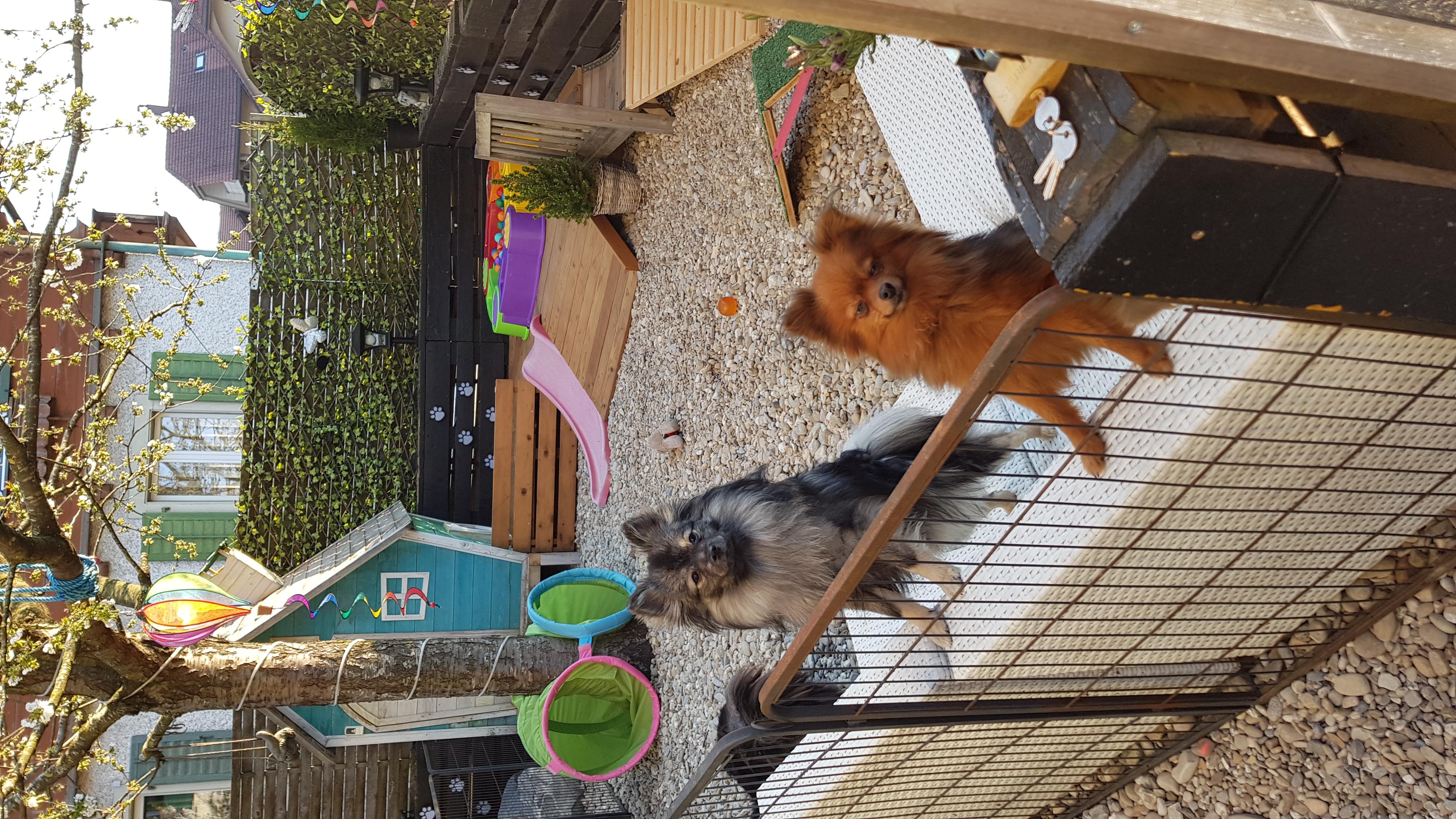 LIam und Chels im Garten.jpg