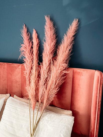 Pink Fluffy Pampas