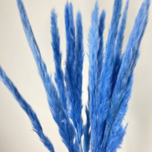 Blue Mini Pampas