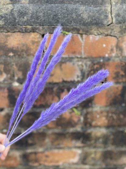 Lavender Mini Pampas
