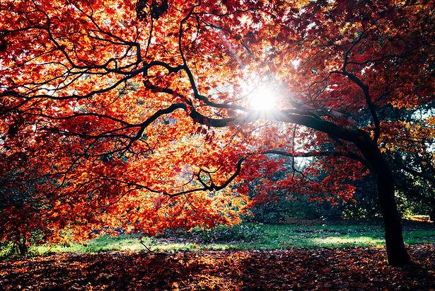 Fall Special.jpg