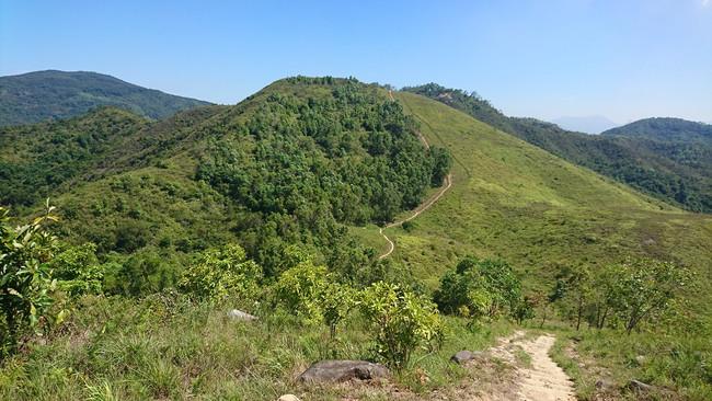 Tai Lam Chung Plantation Area
