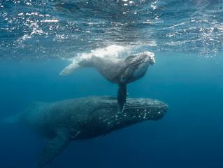 Underwater Camera Advice