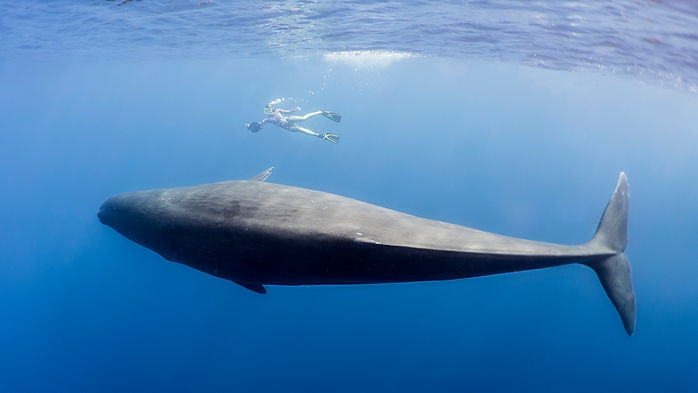 Swimmer with whale tonga