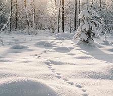 animal tracks winter.jpg