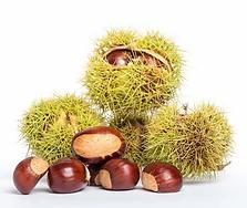 chestnuts.webp