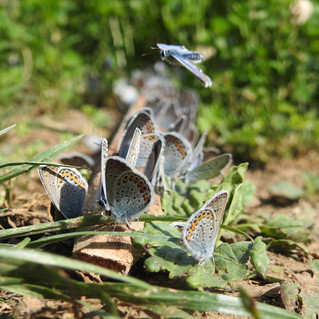 Welke vlinders zijn dit?