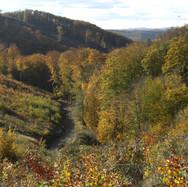 Herfst mountainbike