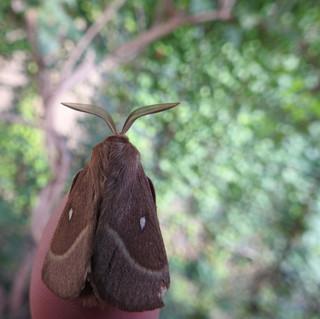 Een nachtvlinder