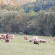 Herder met schapen en runderen