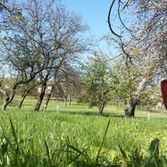 Het terrein in de lente