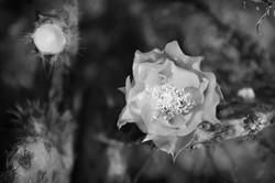 fleur4