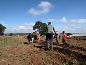 Kurz- und langfristiges Verhalten am Beispiel Landwirtschaft