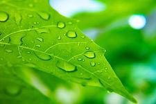 leaf-5402482_1920_edited.jpg
