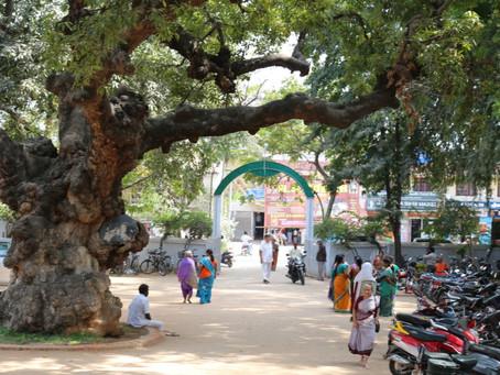 インドで、最大の聖地は『自分』だという事に気づく