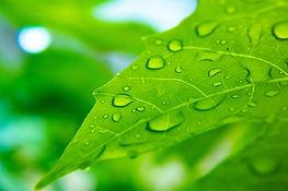 leaf-5402482_1920.jpg