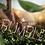 Thumbnail: BSD Bumbles Font