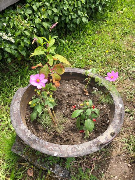 Petit atelier jardinage avec les CE2/CM1/CM2 : Ils profitent des récréations pour entretenir le jard