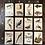 Thumbnail: Natural History Pocketbooks