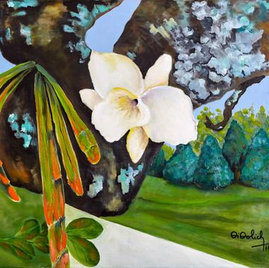 Orquídea Blanca. 2015. Óleo sobre lienzo. 50 x 50 cm