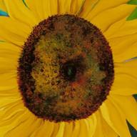Girasoles en Chaco. 2003. Óleo sobre lienzo. 60 x 80 cm