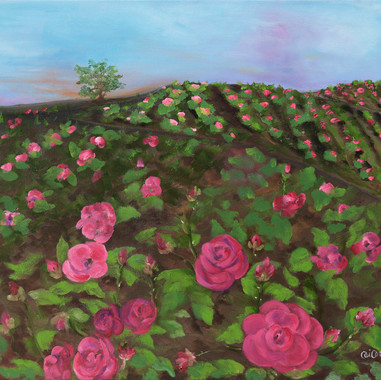 Campo de rosas Reina Victoria, 2014. Óleo sobre lienzo. 60 x 50 cm