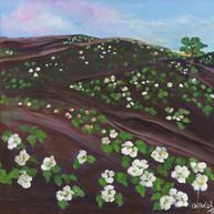 Campo de rosas blancas, 2014. Óleo sobre lienzo. 50 x 50 cm