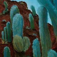 Cardones. 2004. Óleo sobre lienzo. 80 x 80 cm