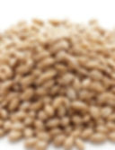 Raw-pearled-barley_edited_edited_edited.