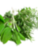 Herbs-PNG-Pic.png