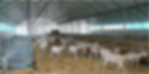 structura ferma ,ferma de vaci,ferma de capre,ferma de oi,ferma de vaci de lapte,ferma cai,ferma porci,ferma de animale,costructor ferma de animale,adapost ,adapost vaci,adapost tauri,adapost vitei,adapost oi,adapost capre,adapost cai,dotari ferme