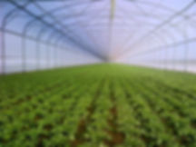 Sere,solarii,incalzire,greenhouses,tunnel.invernaderos,serre