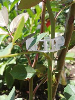 clip pentru fixare plante de gradina