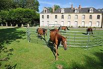 echitatie,tarc pentru cai,echipamente cai,boxe cai ,adăposturi cai
