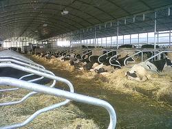 Constructie  ferma vaci de lapte