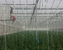 încălzire seră de legume cu generator de aer cald pe gaz