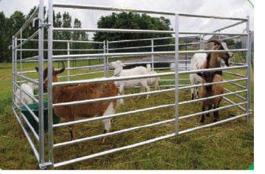 Gard-pasunat--capre.jpg