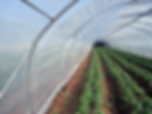 Gama de solarii pentru culturi de rosii,castraveti ,ardei,vinete:solarii pentru legumicultura,solar gonflabil,solat pentru flori,solar pentru legume,constructie solar,solar gonflabil,structura galvanizata solar ,sera,incalzire solar.irigatie solar