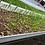 Thumbnail: Microgreens
